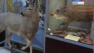В Зоологическом музее открылась выставка «Чем мы не похожи?» (ГТРК Вятка)