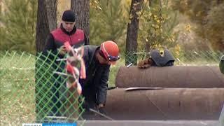 В Красноярске установят самую высокую ёлку в стране
