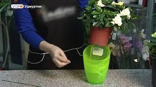 """Эксперты """"Доброго утра"""" о том, как сохранить влагу в комнатных растениях во время отпуска"""