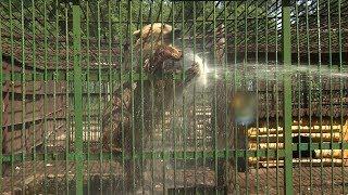 В уфимском парке лесоводов от жары мучаются медведи