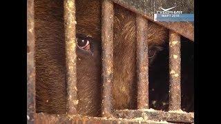 У оставленных на улице медведей из Куйбышевского района появился дом