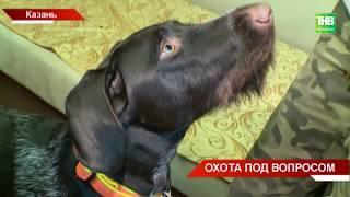 Закон о притравке охотничьих собак приняли депутаты Госдумы - ТНВ