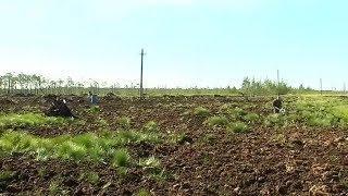 Биопрепарат вернёт жизнь земле после нефти