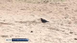 На двух городских пляжах Череповца официально разрешили купаться