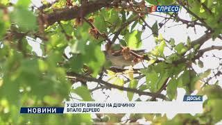 У центрі Вінниці на дівчинку впало дерево