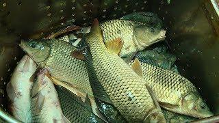 СПК «Ергенинский» начал реализацию рыбы