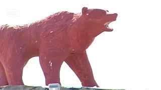 Медведи победили