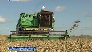 Россия отправит в Бразилию вторую партию пшеницы