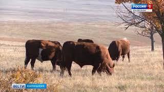 В Элисте собрались представители сельскохозяйственной науки из всех регионов России