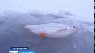 Состояние льда на водоёмах Калининградской области оценили с высоты птичьего полёта
