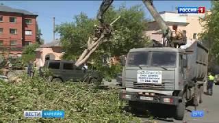В Петрозаводске на улице Красная упало дерево
