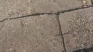 Протекающий водопровод затопил частный двор в Пятигорске