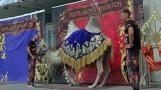 Всемирно известные артисты цирка раскрыли секреты трюков челябинским школьникам