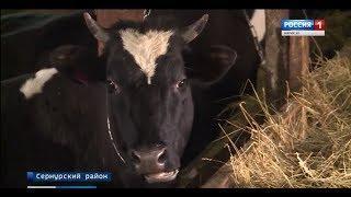 Фермеры Марий Эл развивают свои хозяйства с помощью грантов