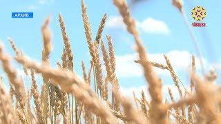 В районах Чувашии полным ходом идет заготовка кормов.