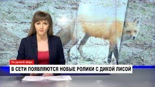 НОВОСТИ от 22.11.2018 с Ольгой Тишениной