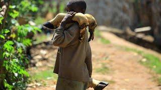 Вакцина против Эболы