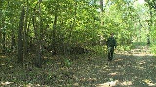 В Волгоградской области растет площадь рукотворных лесов
