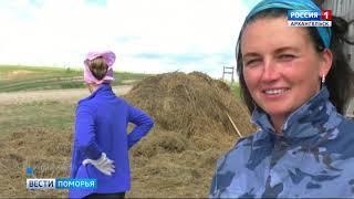 Североонежские волонтёры приняли участие в строительстве конюшни