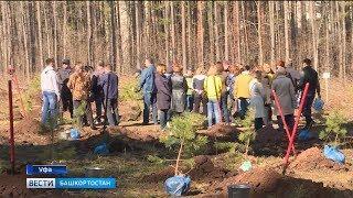 Республика присоединилась ко Всероссийской акции в честь Дня посадки леса