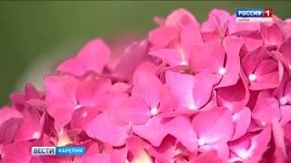 Новые коллекции цветов представили в Садовом центре Петрозаводска