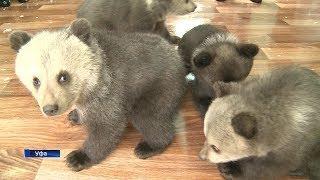 Медвежата в уфимском вольере уже готовы принимать гостей