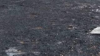 Ярославцы обеспокоены состоянием озера в районе улицы Гагарина