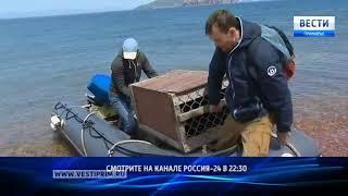 Как судьбы спасателей тюленей из Приморья сплетаются с историями из Голландии
