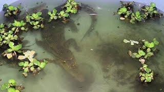 Крокодилы в церкви