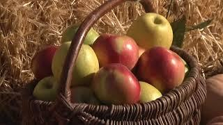 Работники сельского хозяйства отметили свой профессиональный праздник
