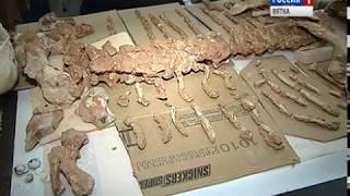 Кировскому музею передали отпечатки древних растений(ГТРК Вятка)