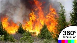 Москва и Подмосковье объединили усилия для предотвращения природных пожаров