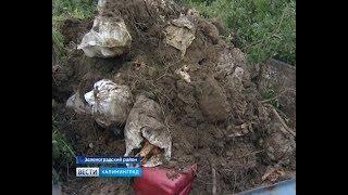 В Зеленоградском районе ликвидирована незаконная свалка останков свиней