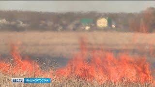 Под угрозой лесных пожаров находятся семь районов Башкирии