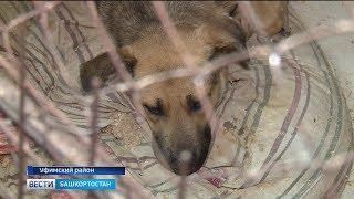 Уфимские зоозащитники утверждают, что в городе сжигают бездомных животных