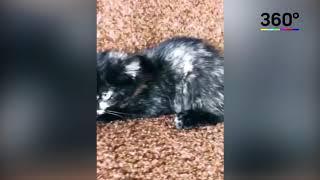 «Ты ему позвоночник сломал»: подростки показали котенка после вечеринки с пыткой в духовке