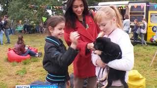 В Калининграде прошла первая выставка собак и кошек из приютов