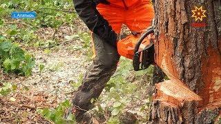 Конкурс на лучшего вальщика леса накануне прошел в Алатыре.