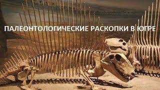 Во время палеонтологических раскопок в Югре обнаружены останки мамонта