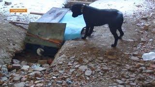 Пострадавших в техногенных катастрофах на Ставрополье спасут специально обученные собаки
