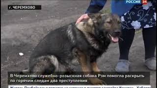 В Черемхово служебно розыскная собака Рэм помогла раскрыть два преступления по горячим следам