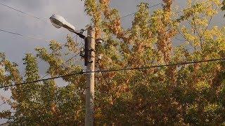 На шести пензенских улицах прохожим угрожают деревья над линиями электропередач