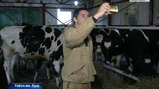 Вести-Хабаровск. Инвестиции в корову