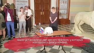 Кот Ахилл предсказал итог матча Россия – Египет на ЧМ-2018