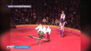 Полвека под куполом: уфимский цирк отмечает юбилей