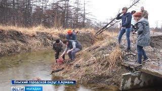 Выпускной в рыбьем детском саду . Малышей лосося отправили во взрослую жизнь
