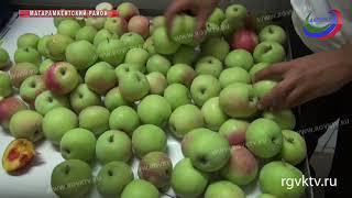 Россельхознадзор задержал 83 тонны зараженной продукции из Азербайджана