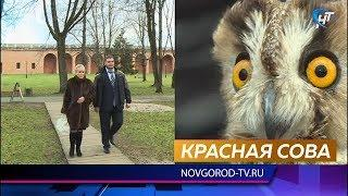 Новгородские коммунисты взяли под опеку двух птиц «Новгородского соколиного двора»