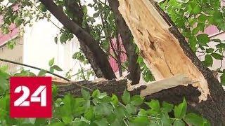 Шквалистый ветер в Москве: шестеро пострадавших, среди них двое детей - Россия 24