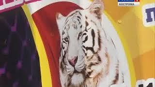 Полицейские ищут лжетеррориста, всполошившего посетителей костромского цирка